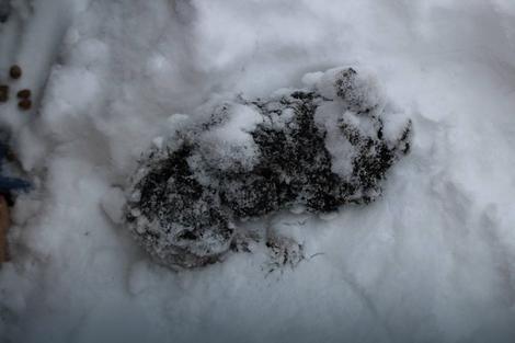 Jedno od šest smrznutih štenaca