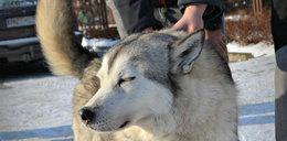 Odnaleziona tożsamość Borna. Niezwykła historia psa z Rzeszowa