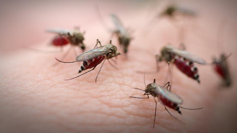 Jak bronić się przed komarami - kilka cennych porad