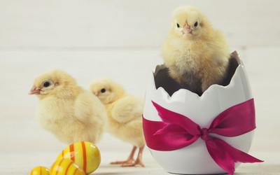 Wierszyki Na Wielkanoc śmieszne Wierszyki O Wielkanocy