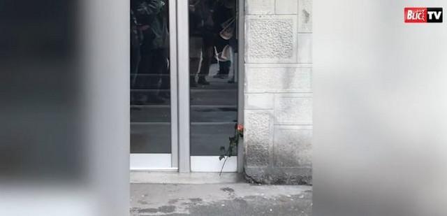 Ruža ispred zgrade