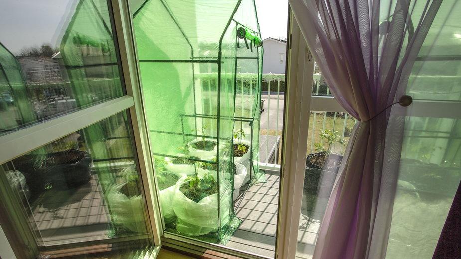 Szklarnia balkonowa - wszystko, co musisz o niej widzieć