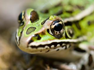 Jedna czwarta wszystkich gatunków na Ziemi jest zagrożona wyginięciem