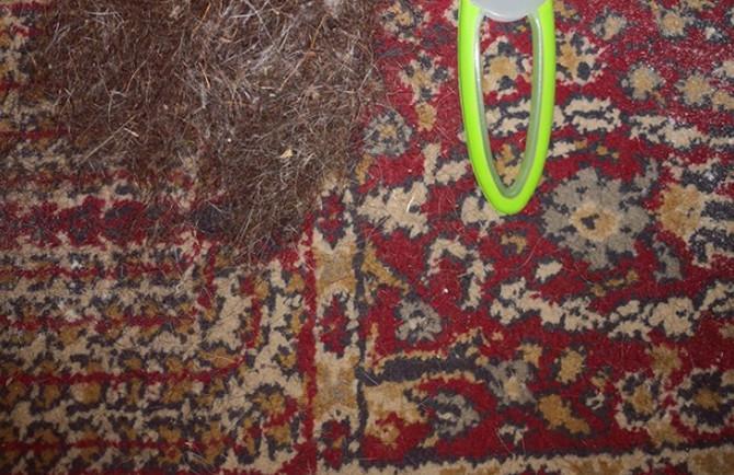 Da li imate hrabrosti da proverite šta se krije u vašem tepihu?