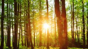 Możliwość pierwokupu lasów prywatnych przez państwo - z podpisem prezydenta