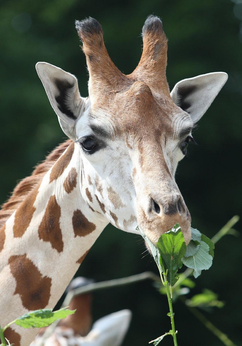 Piękne zwierzęta
