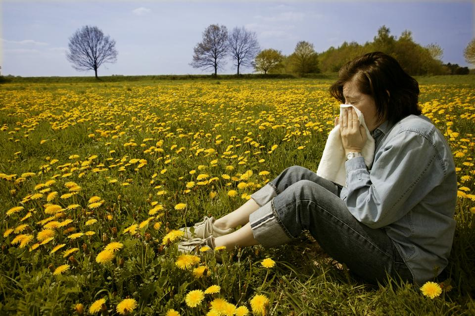 6. Łagodzi objawy alergii