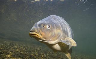 Prawomocne skazania za znęcanie się nad rybami