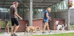Psy z Gaju tropiły pokemony