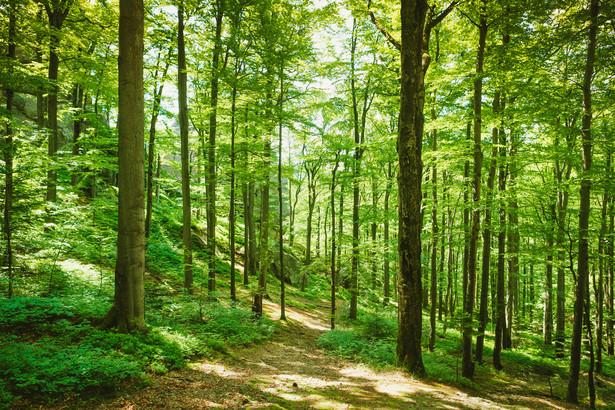 Ścieżka na Miejskiej Górze ma liczyć 218 m długości.