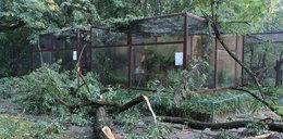 Nowe Zoo zamknięte