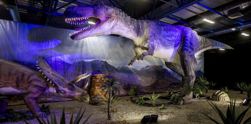 Dinozaury osiedliły się w Chorzowie