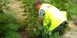 Hodowała marihuanę na zmarszczki