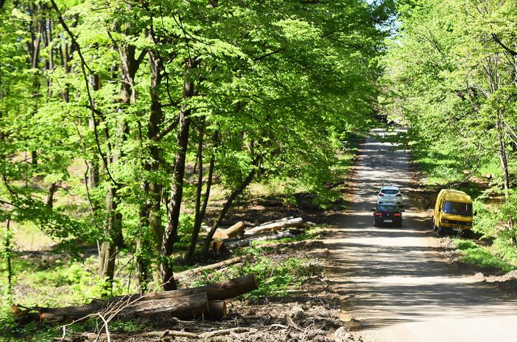 Novi Sad490 fruska gora seca sume drveca  foto Nenad MIhajlovic