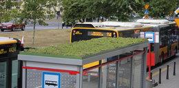 Pierwszy zielony przystanek w stolicy