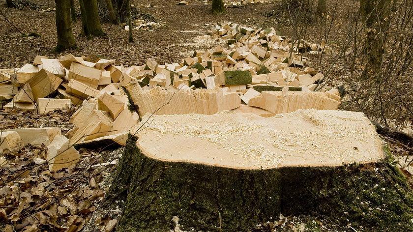Tragedia w Międzygórzu. Nie żyje 28-latek przygnieciony przez drzewo