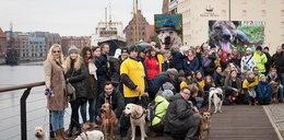 Psiaki ze schroniska przejdą ulicami Gdańska