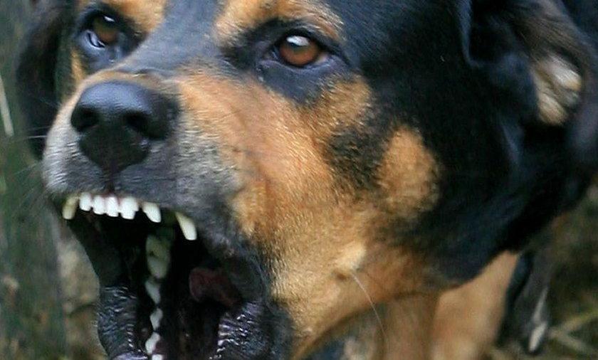 Indie. Bezpańskie psy zagryzły sześcioro dzieci