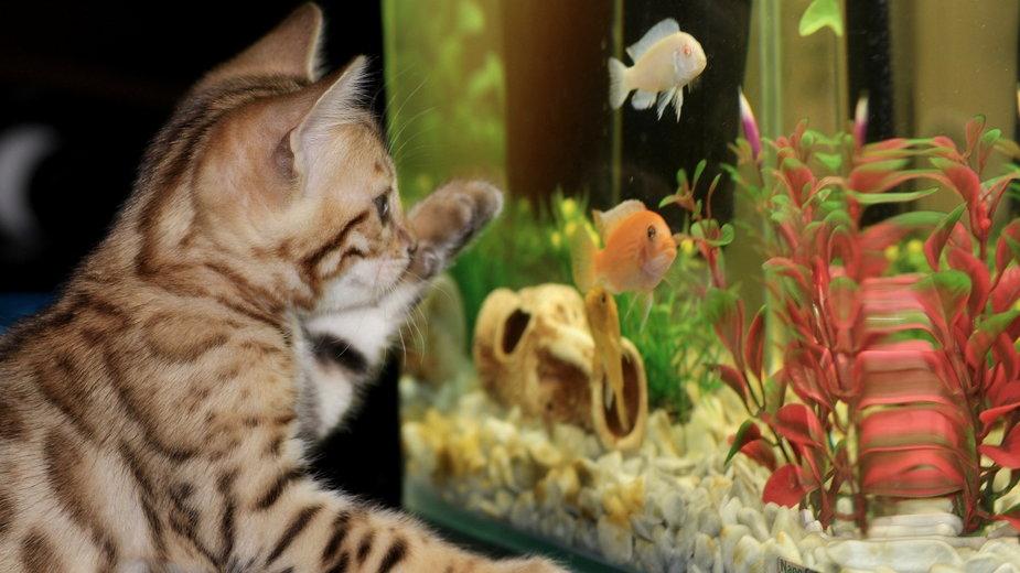 Akwarium powinno być dostosowane do ryb, które mają się w nim znaleźć - Irina_kukuts/pixabay.com