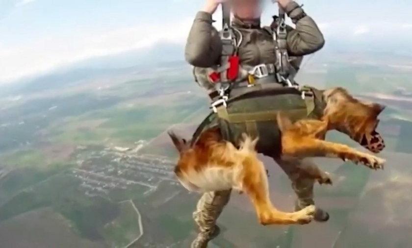 Czy psy będą mogły regularnie skakać ze spadochronem?