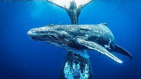 11. Wielki Konkurs Fotograficzny National Geographic - można już zgłaszać prace konkursowe