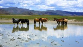 Mongolia znosi wizy turystyczne dla Polaków i obywateli innych krajów Unii Europejskiej do końca 2015 r.