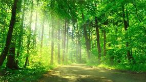 Odkryj najpiękniejsze zakątki w Polsce - Konkurs Lasów Państwowych i National Geographic
