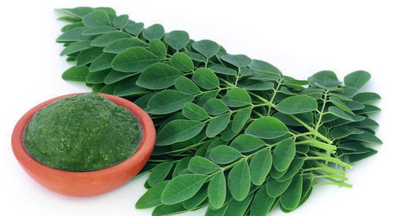 5 health benefits of drinking moringa juice every day
