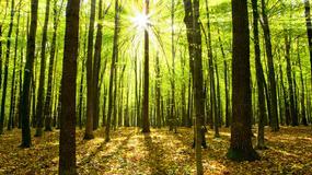 Naukowcy policzyli, ile jest gatunków drzew na świecie