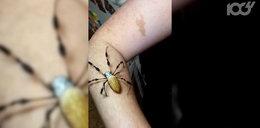 Zobacz największe pająki na świecie