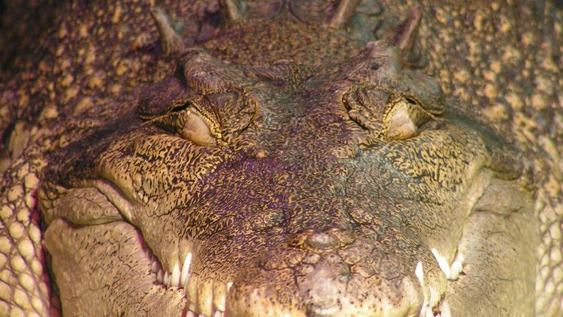 Oto nowy gatunek prehistorycznego kuzyna krokodyli