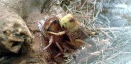 Poznaj świat owadów