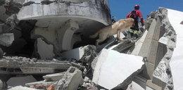 Pies oddał życie, by ocalić ludzi