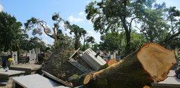 40 drzew zwaliło się na cmentarz w Konstantynowie Łódzkim