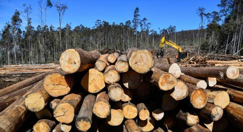 Kenya lifts year-long logging ban to the relief of more than 30,000 Kenyan families