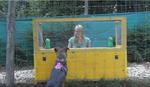Naučnici tvrde: Vukovi su ipak pametniji od pasa