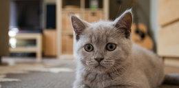 Sprawdź, co robić żeby Twój kot był szczęśliwy