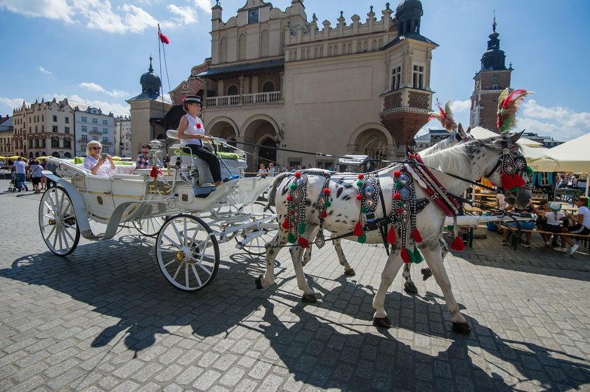 Konie na krakowskim rynku pracują w upale