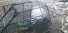 Zabili psa prądem. Jeden z katów nie żyje! Miał rozrusznik serca