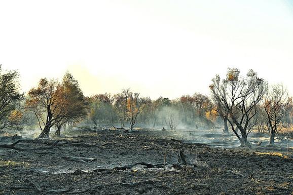 CARSKA BARA: Park prirode opustošen u požaru