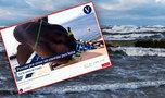 Niebywały stwór szokuje naukowców! Jest nagranie tego olbrzyma, który... pływa na boku!