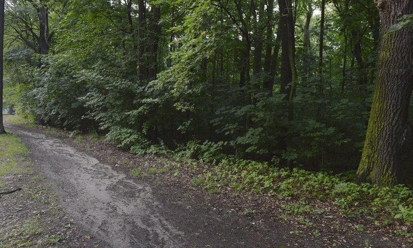 Staruszka nawiedza lasy w całej Polsce. Ostatnio była w Wałbrzychu