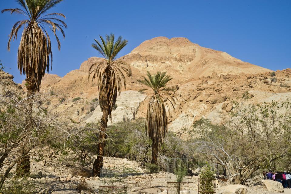 En Gedi - park narodowy na zachodnim brzegu Morza Martwego.