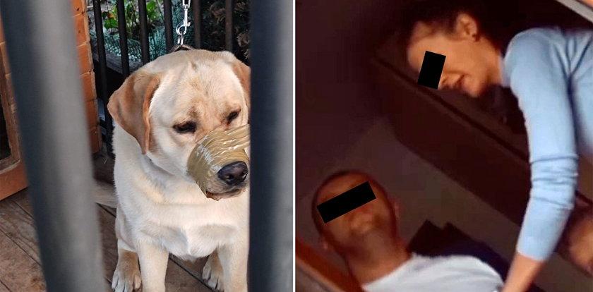 Koszmar psa. Zakleili mu pysk taśmą