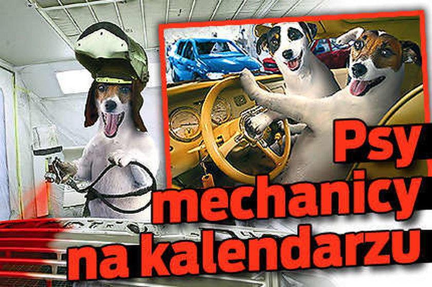 Psy jeżdżą autami. Foto