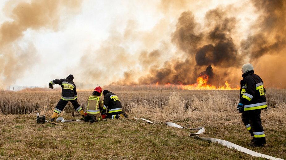Goniądz - pożar suchych traw w Biebrzańskim Parku Narodowym, 2020 r.