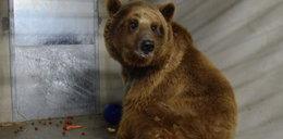 Zoo zamyka taras widokowy niedźwiedziarni