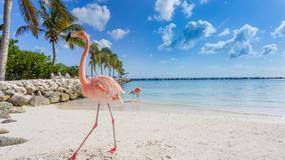 Wakacje na różowo: Wyspa Flamingów