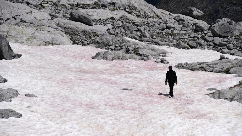 Różowy śnieg w Alpach