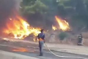 GORI PELJEŠAC Veliki požar zahvatio šumu, naložena evakuacija, JAKA BURA otežava gašenje vatre (FOTO, VIDEO)